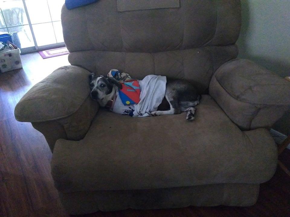 Polly-recliner.jpg